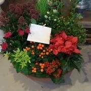 img coupe de plantes colorée